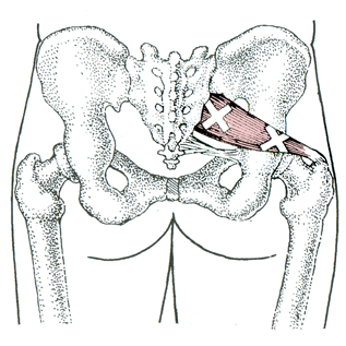 Piriformis – A real pain in the … by David Keil